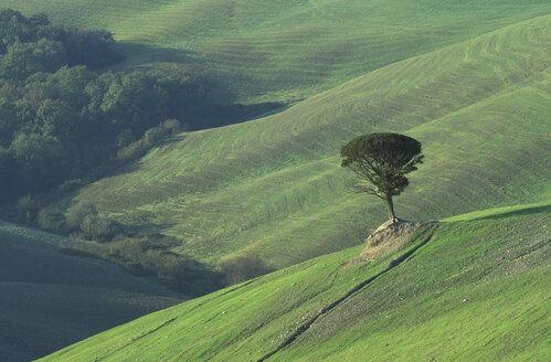 Italy, Tuscany, Volterra, landscape - 00487HS