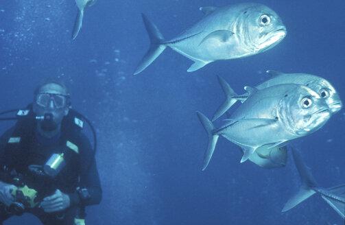 Malaysia, scuba diving - 00116MB