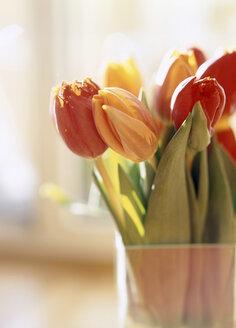 Tulip flowers in vase - PE00142