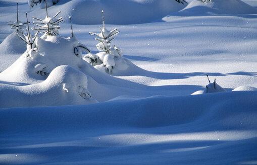 Snowy landscape - EK00313