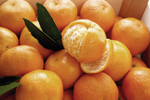 fresh tangerines - 00311CS-U