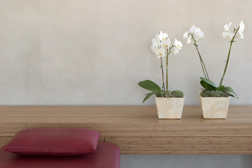 Two potted orchids in front of wall on shelf by red couch - 00144BM-U