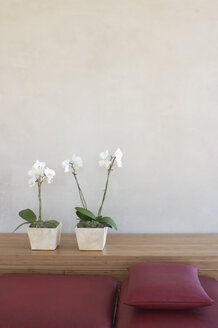 Two potted orchids in front of wall on shelf by red couch - 00141BM-U