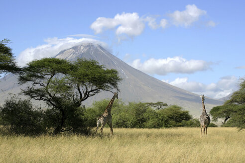 Tanzania, Ol Doinyo Lengai, giraffes at shore of lake natron - RM00027
