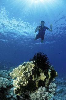 Snorkler over corals - GN00536