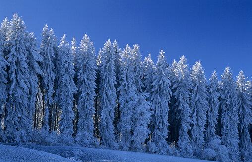 Germany, Black forest snow-covered trees - EK00324