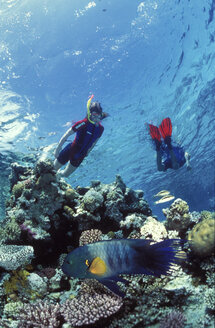 Snorklers with broomtail wrasse - 00035GN