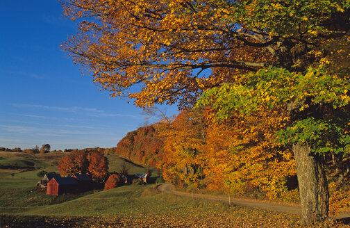 USA; Vermont; Green Mountains; Jenny Farm - HS00861