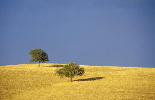 Italy, Toscana, tree and field - GSF00492