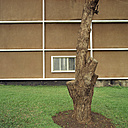 Tree trunk with wall in background - PM00329