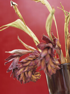Wilted ginger flowers in vase - HOEF00188