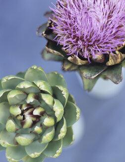 Artichoke and artichoke blossom - HOEF00182