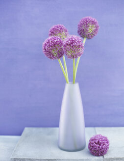 Onion flower (allium giganteum) in vase - HOEF00169