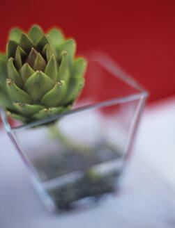 Artichoke in vase - HOEF00160