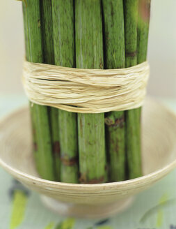 Bamboo (Rheinautria) stem tied up with bast, close-up - HOEF00111
