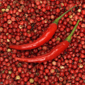 Red chillies on red pepper, close-up - WESTF00843