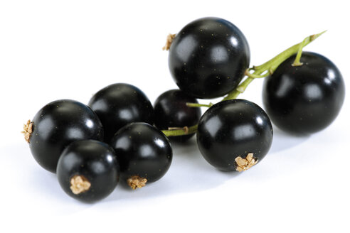 Blackcurrants against white background, close-up - 04236CS-U