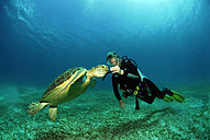 Philippines, scuba diver with green turle - GNF00797