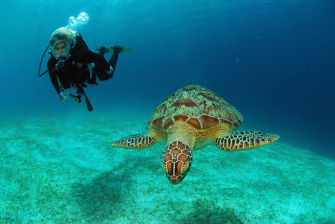 Philippines, scuba diver with green turle - GNF00794