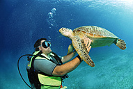 Philippines, scuba diver with green turle, underwater view - GNF00776