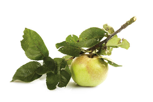 Organic apple on a bough - 04734CS-U