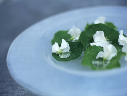 Nasturtium leaves and blossoms on plate - HOEF00211