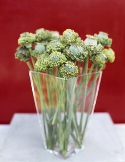 Poppy seed in vase - HOE00184