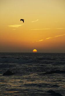 USA, California, San Francisco, sunset at sea - THF00324