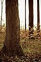 Trees in meadow, detail - DW00055