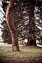 Trees in meadow - DW00038