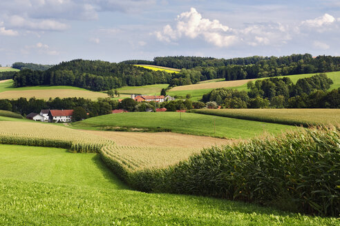 Gerany, Upper Bavaria, fields in hilly landscape - MBF00668