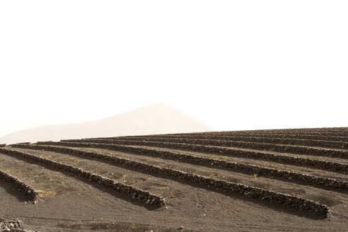 Spain, Lanzarote, field with stone walls - ABF00146