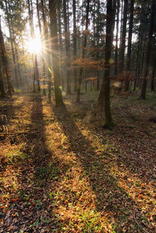 Switzerland, Kranacht, Forest in autumn - SHF00140