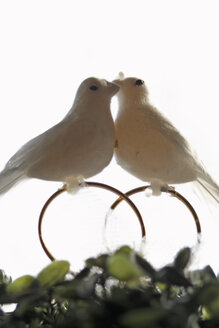 Doves on rings, close-up - TLF00049