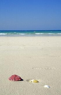VAE, Dubai, Jumeirah Beach, shelss in sand - LF00114