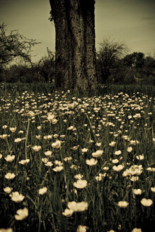 Germany, Knittlingen, Wildflowers and tree trunk - DW00132