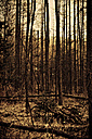 Germany, view of forest - DW00123