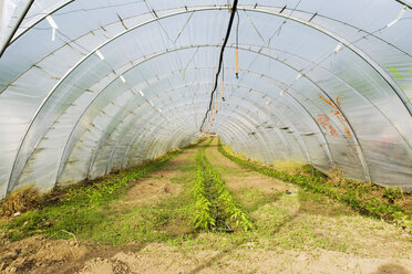 Germany, greenhouse in Baden-Wuerttemberg - MSF02172