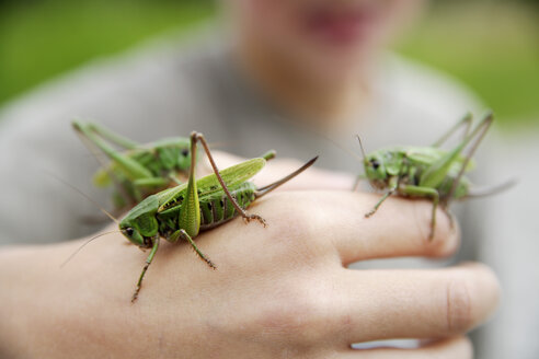 Boy holding long-horned grasshopper, close-up of hand - TCF00360