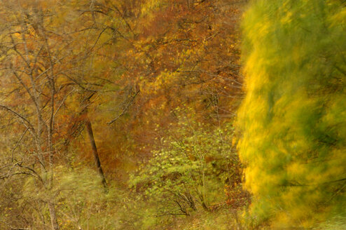 Autumnal colored trees - SMF00247