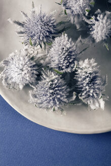 Globe thistle (Echinops) on plate, close-up - MNF00144
