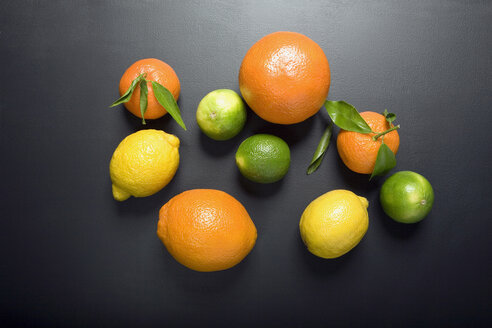 Citrus fruits, elevated view - MNF00126