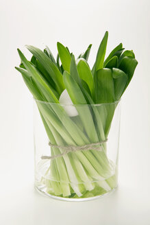 Bunch of hyacinths in flower vase, (Hyacinthus) - MNF00145