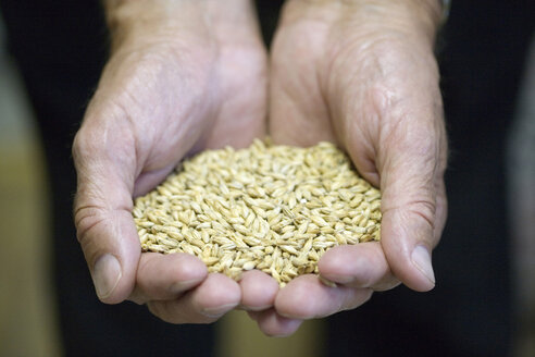 Person holding grains in both hands - HKF00135