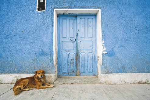 South America, Dog lying on street - FOF00643