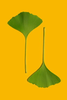 Clover leaves, elevated view - MUF00279
