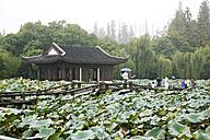 China, Hangzhou, Lotus and pavilion in West Lake - GW00748
