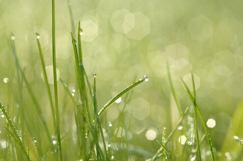Meadow, Water droplets on grass - CRF01426