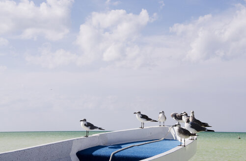 Mexico, Holbox Island, Seagulls sitting on fisherboat - GNF00997