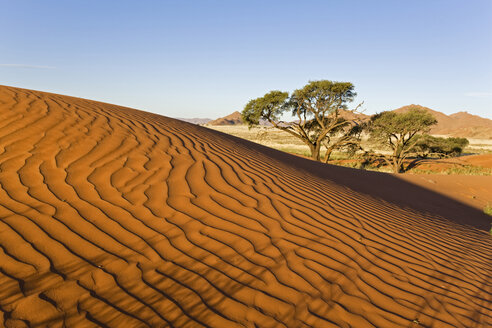 Africa, Namibia, Namib Desert Dune and tree - FOF00823